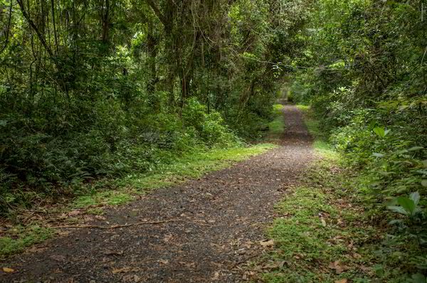 Panamá Pacifico | Parks