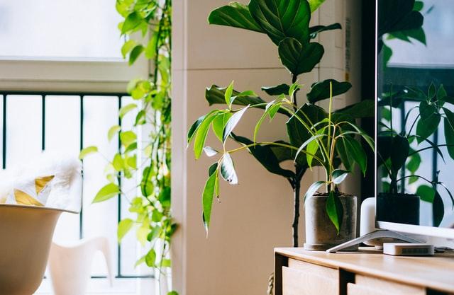 Plantas_deinterior_PanamáPacífico_01